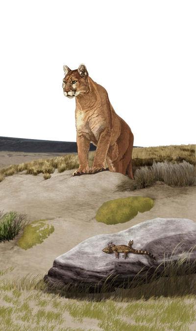 wildlifesample2-jpg