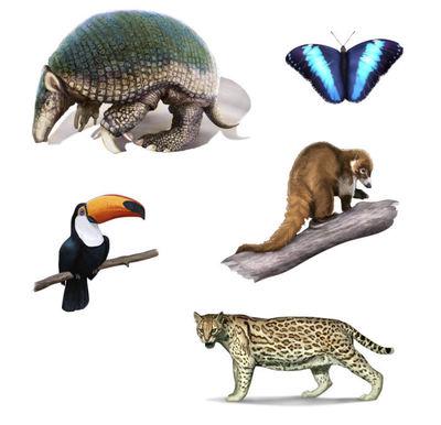 wildlifesample5-jpg