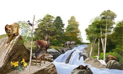 wildlifesample7-jpg