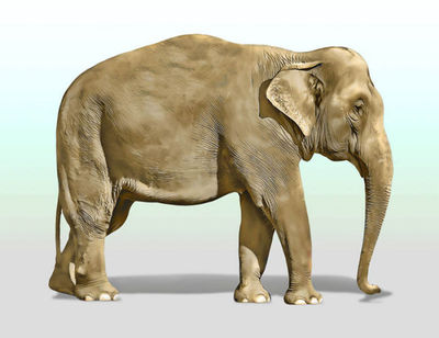 animal-elephant-mammal-jpg