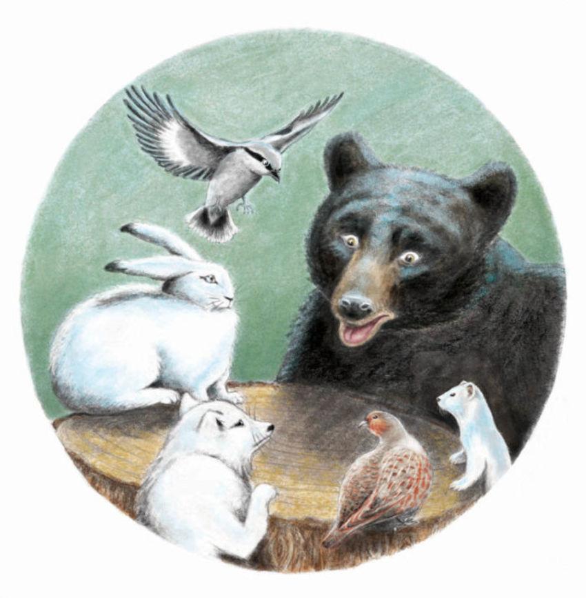Animals Meeting Ermine Bear Hare Bird Fox