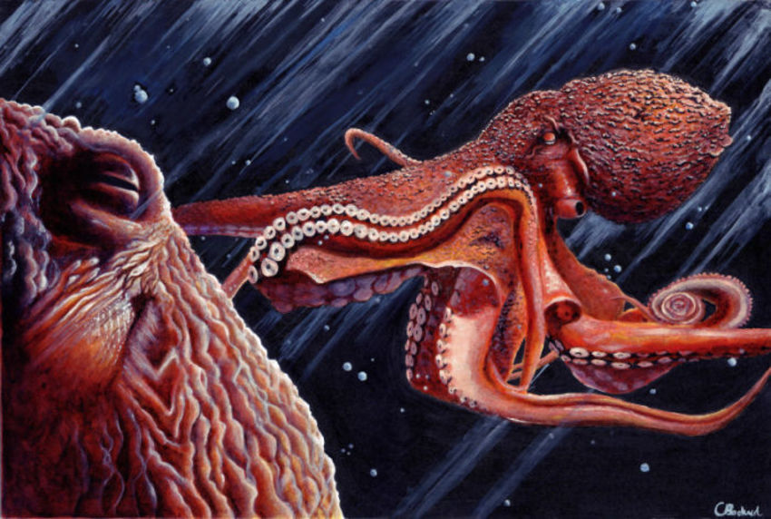 Octopus Mollusc Sea Underwater Cephalopod