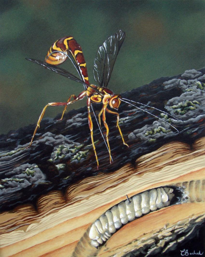 Insect Nature Predation Wasp Larvae