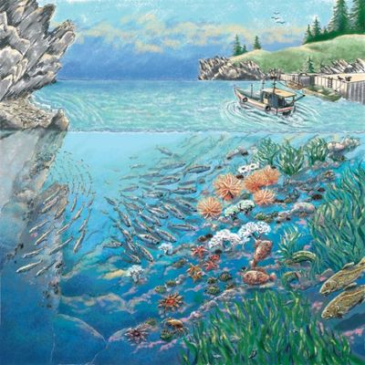 seashore-marine-life-nature-fish-science