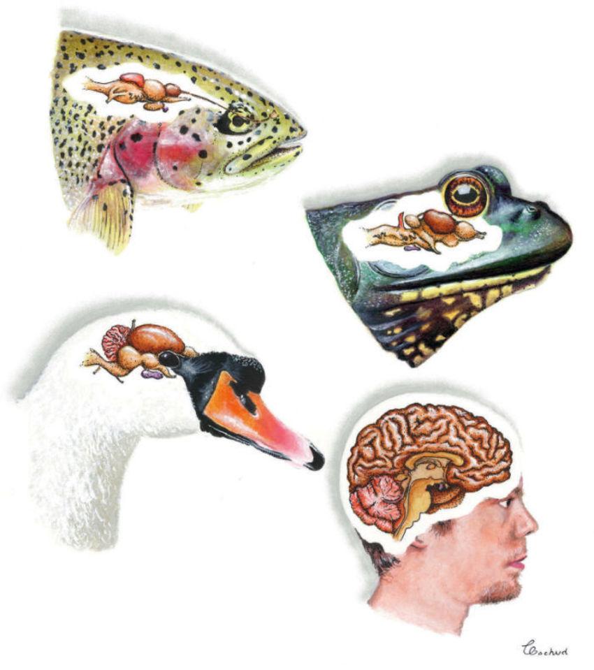 Crane Brain Evolution Science
