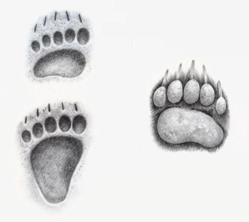 Bear Foot And Print