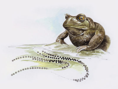 toad-artwork