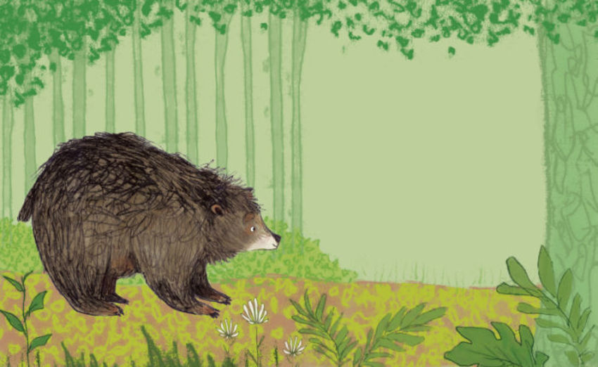 Adam Pryce Bear Forest No Text