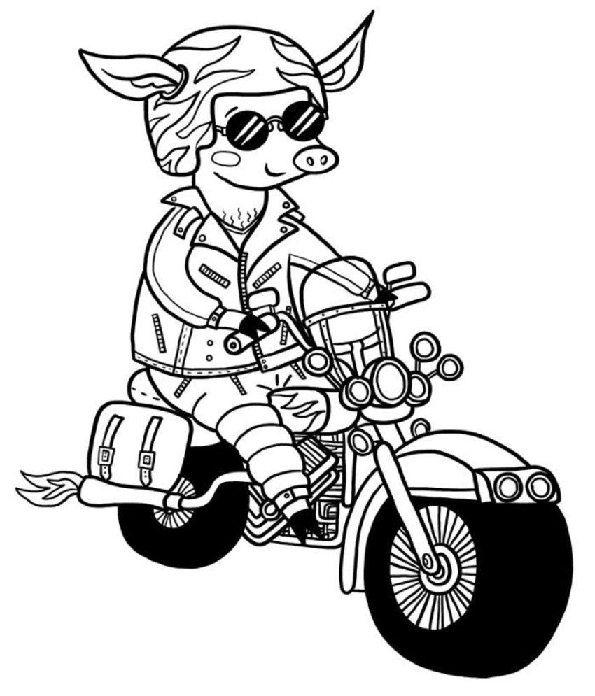 10-cool-pig