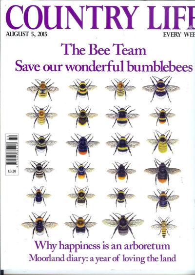 bee-cover