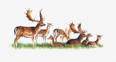 fallow-deer-artwork