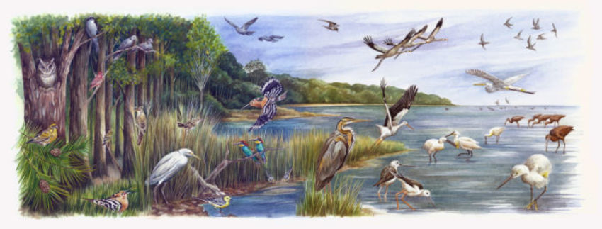 Avian Arrivals Artwork