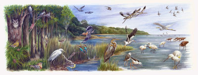 avian-arrivals-artwork