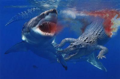 shark-vs-croc-am-aw-jpg-1