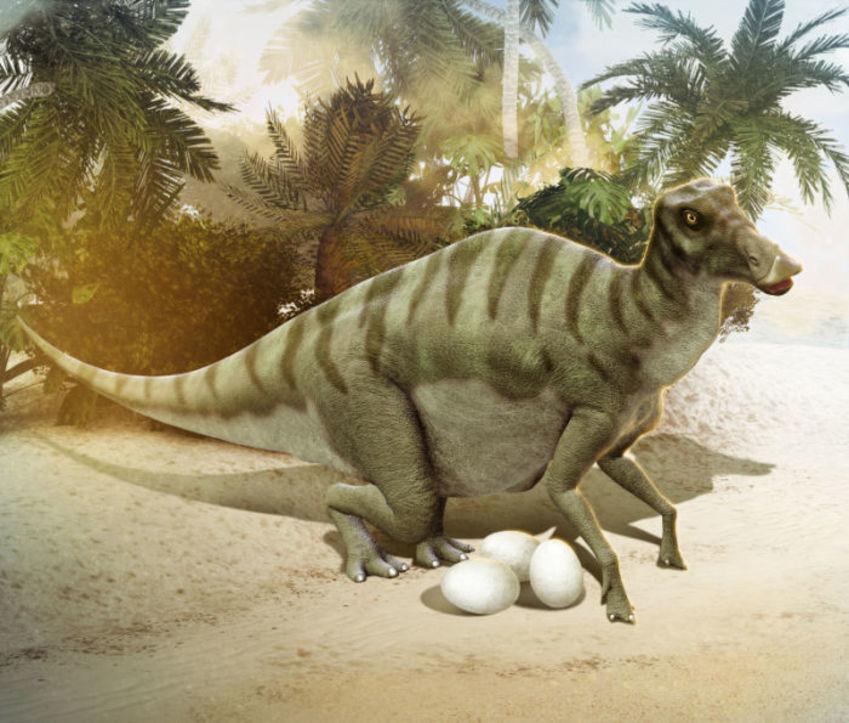 17 Maiasaura With Eggs