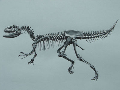 velociraptor-dinosaur-skeleton-fossil