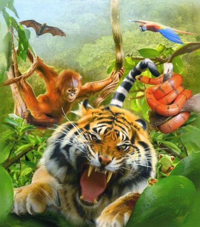 animal-cover-jpg