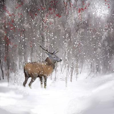 woodland-reindeer