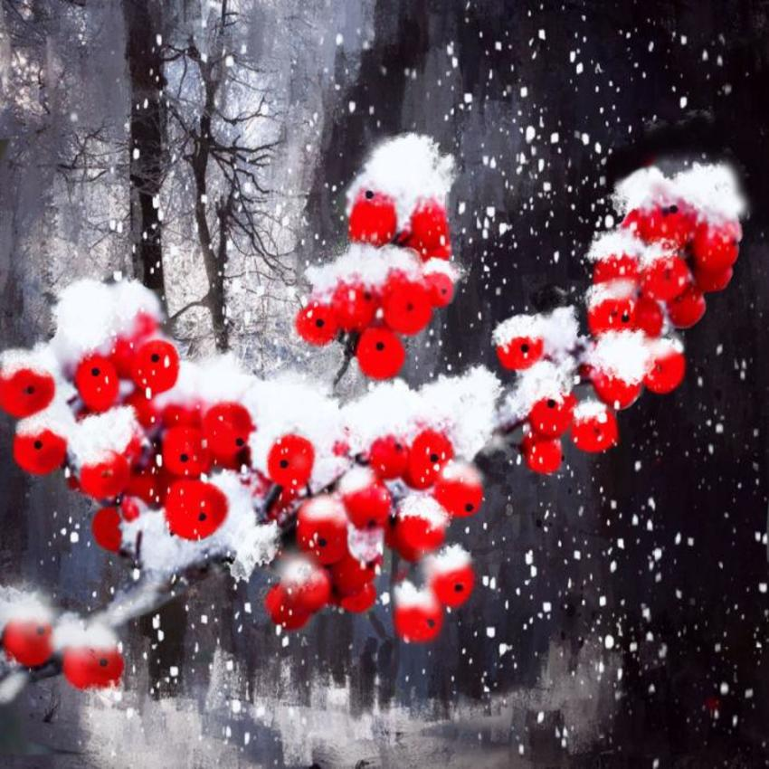 Red Berries In The Snow