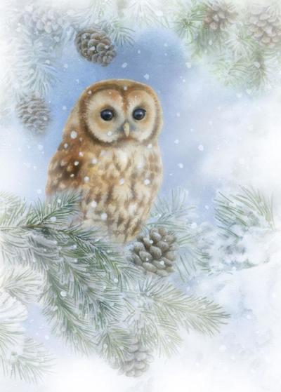 la-christmas-tawny-owl-lo-res