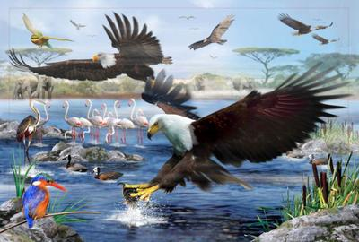 savannabirds