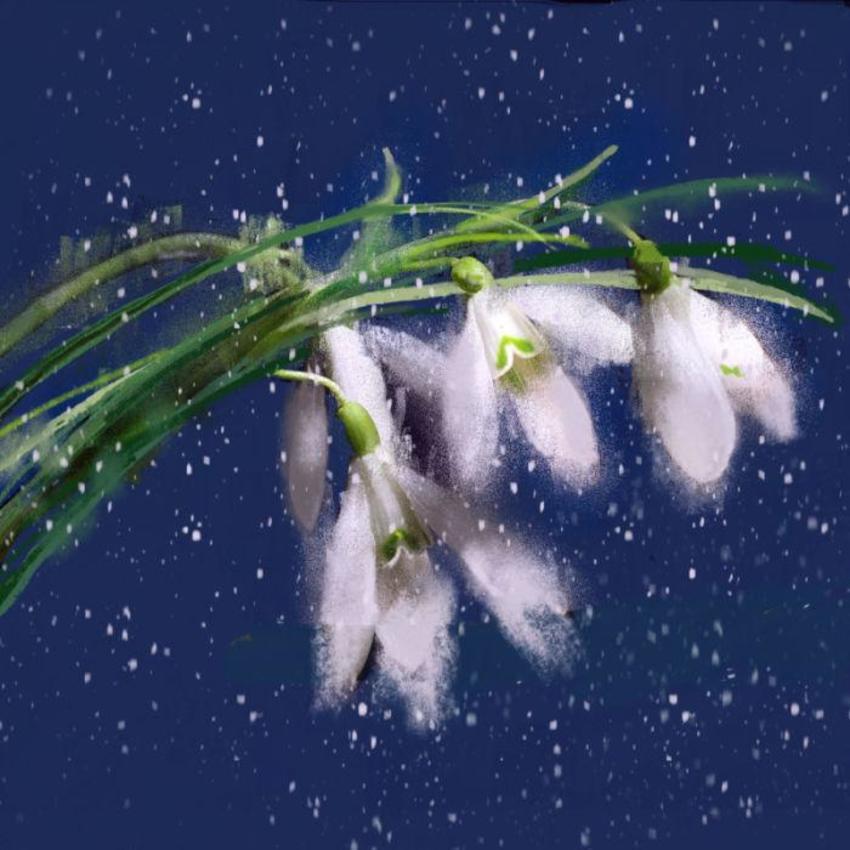 Pastel Snowdrops