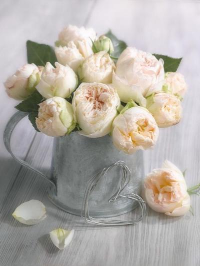 floral-still-life-roses-lmn49730