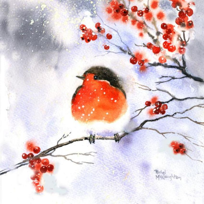 Soft Robin & Berries