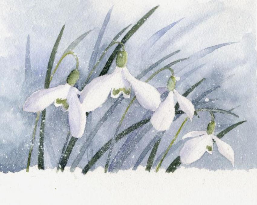 Snowdrops small.jpg