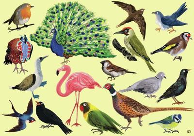 birds-jpg-3