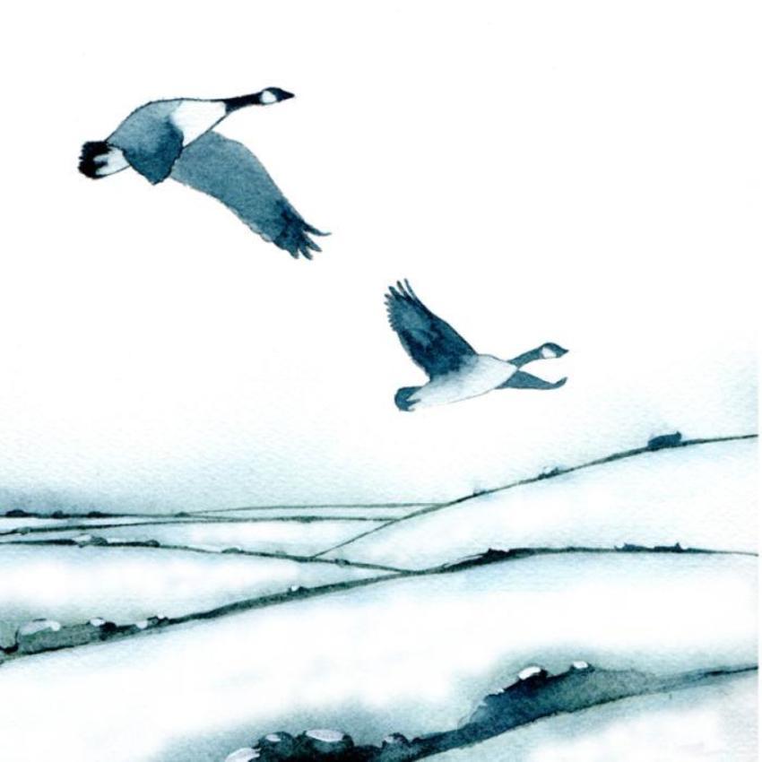 Snowy Fields Canada Geese 100dpi