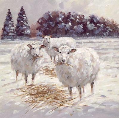 amc-winter-sheep-hi-res-jpg-jpg