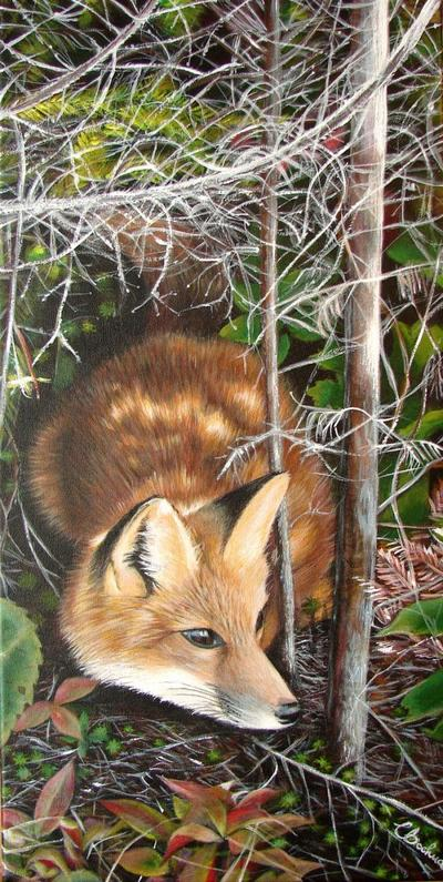 red-fox-wood-forest