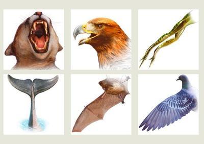 educational-animals