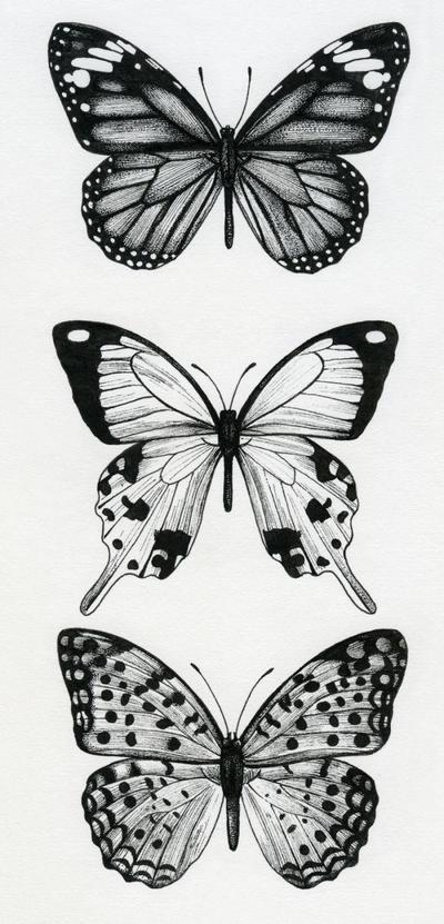 la-butterflies