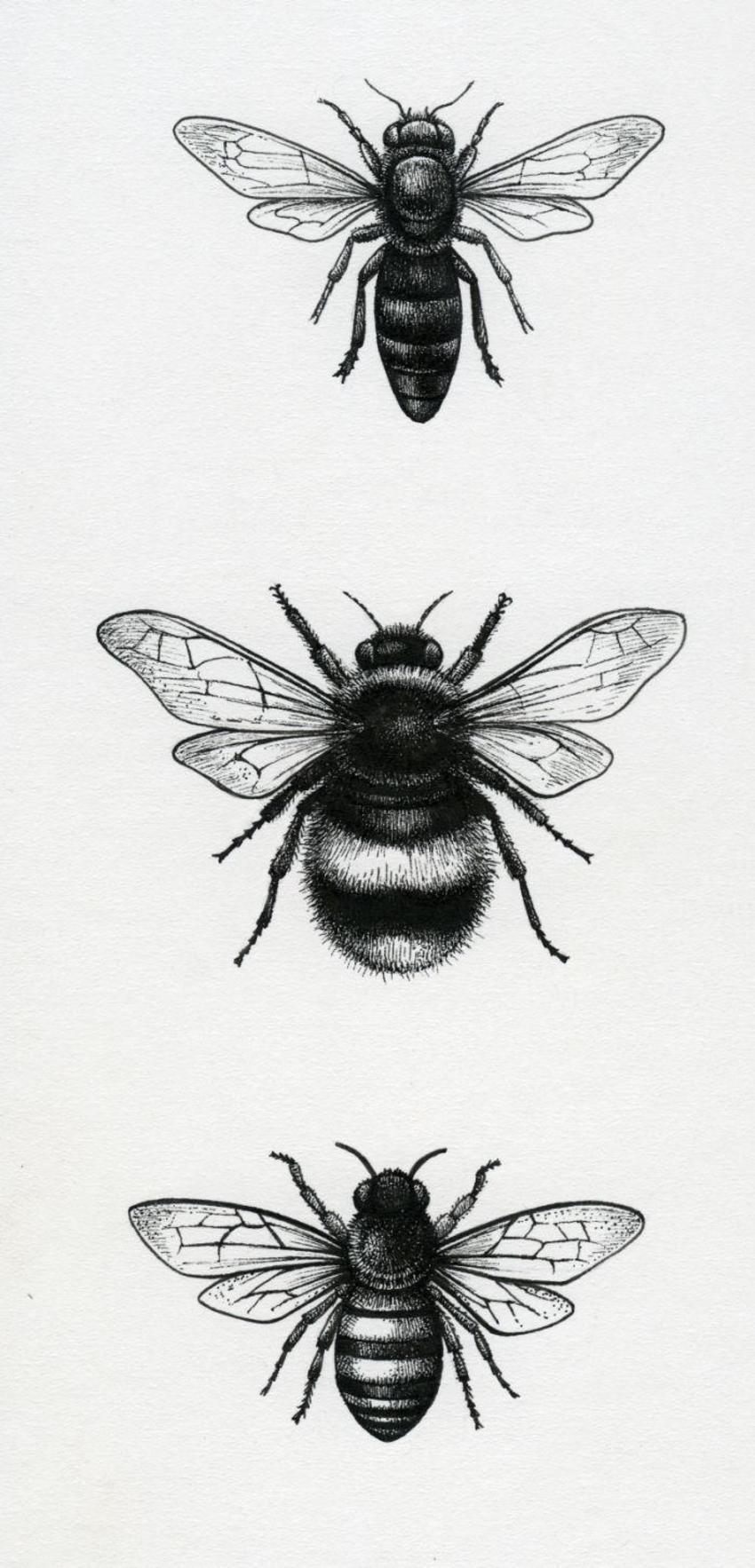 LA  - Bees