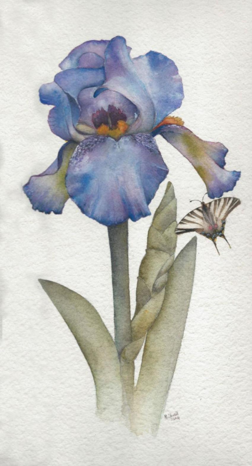Wall Art Iris Flower Butterfly