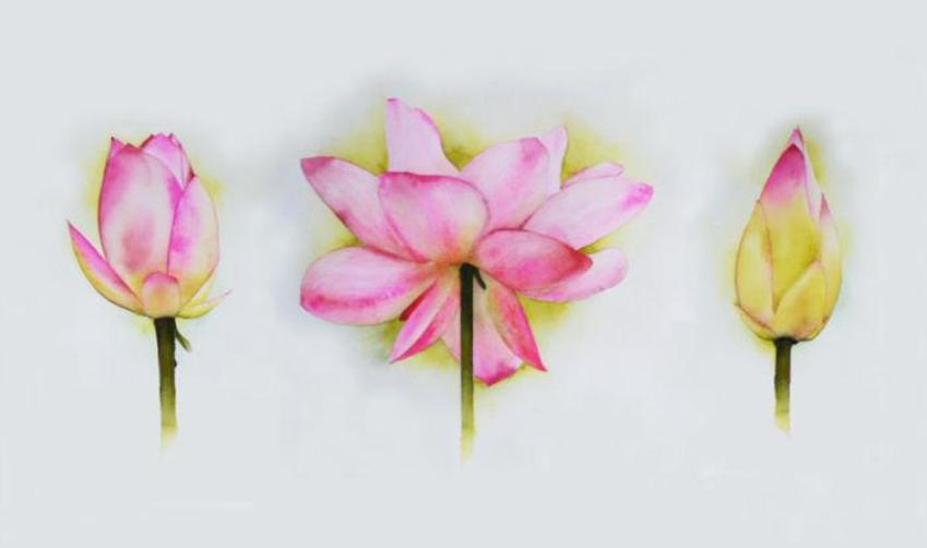 Wall Art Lotus Tryptic