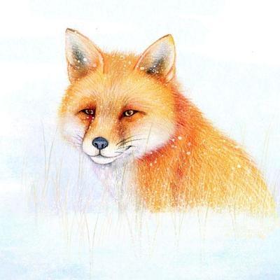 hwood-fox-snow-xmas-square
