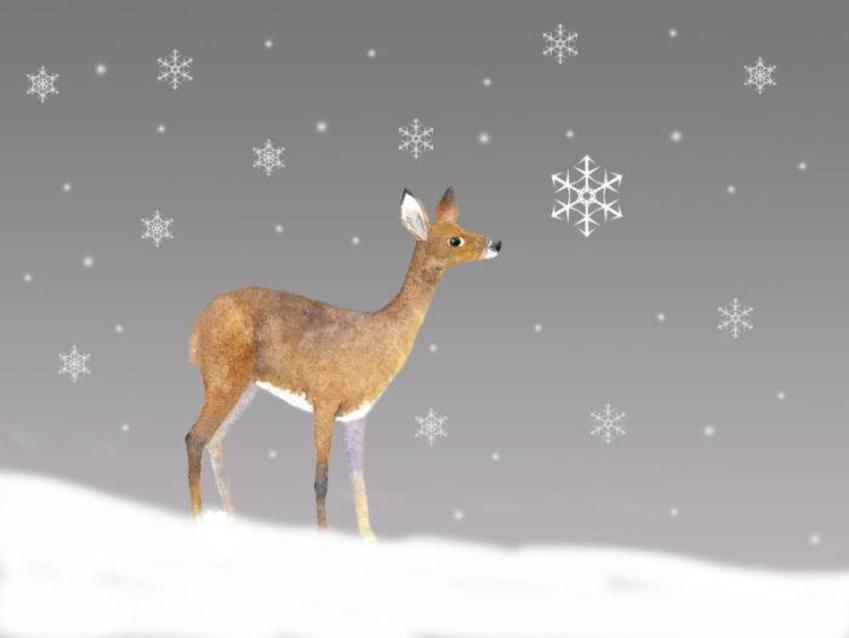 Deer-in-snow-5plus