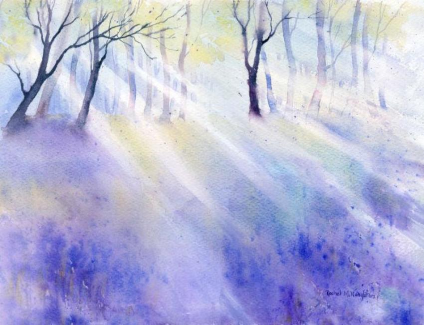 Sunlight On Bluebells