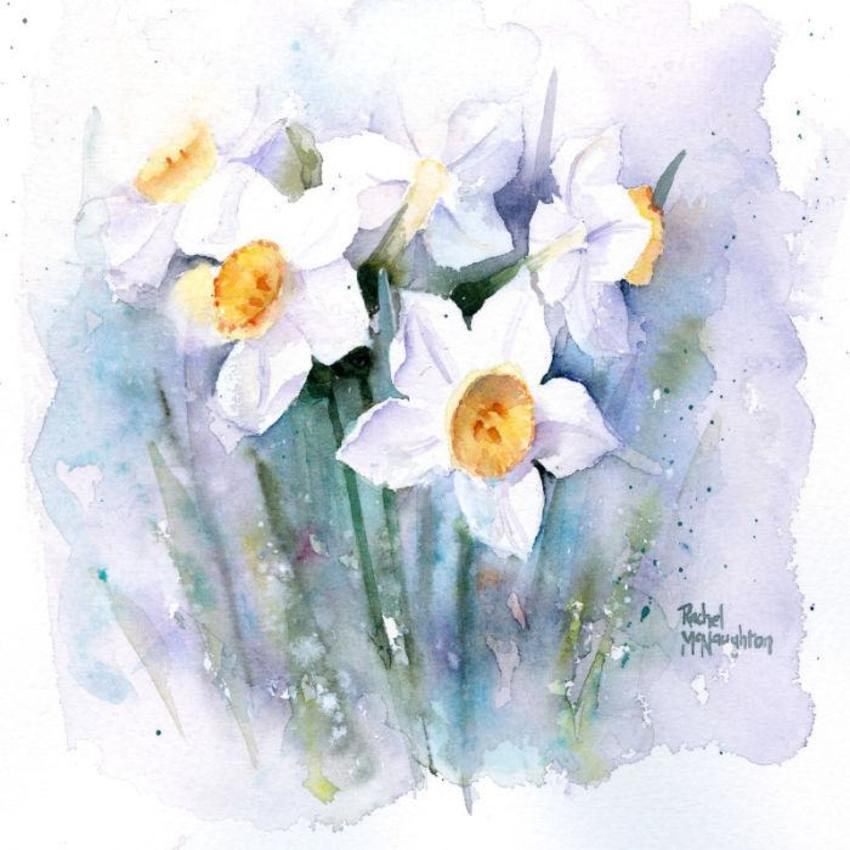 Pale Narcissus