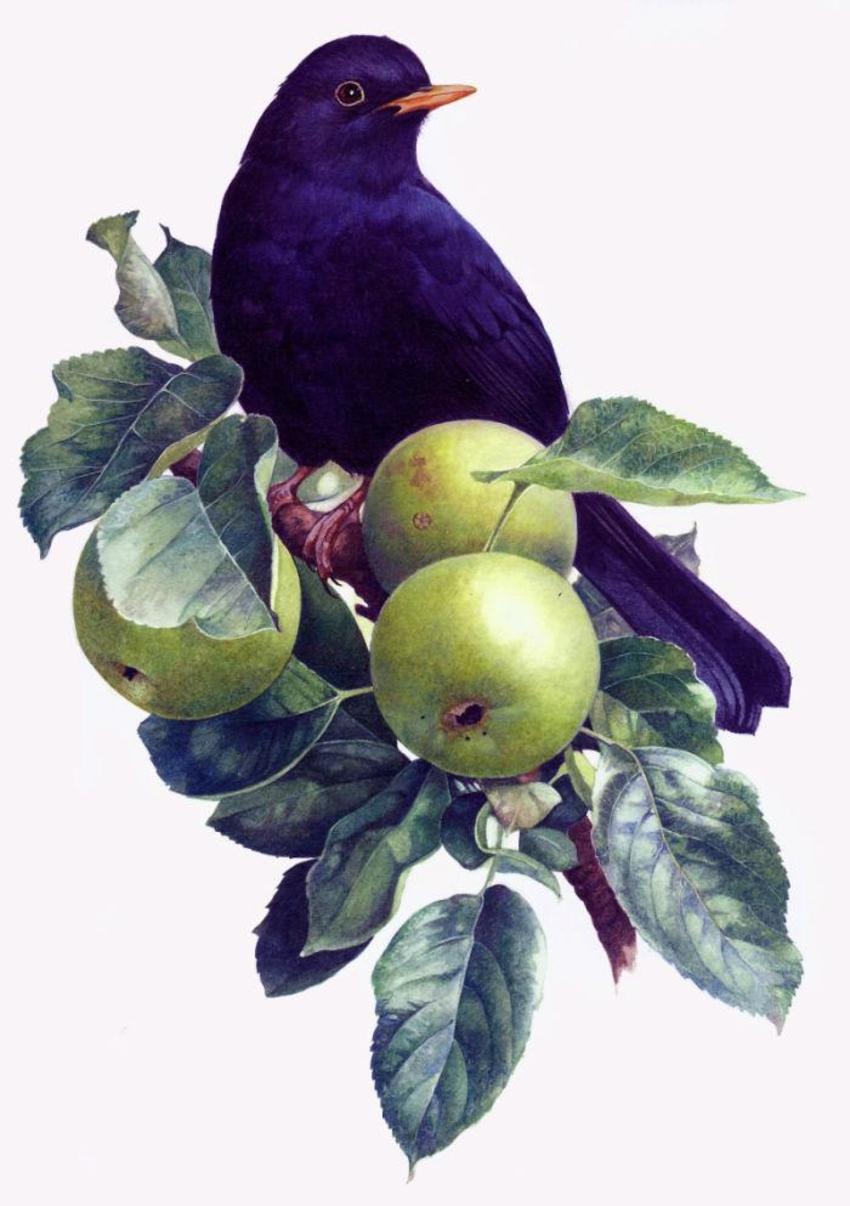 Blackbird In An Apple Tree