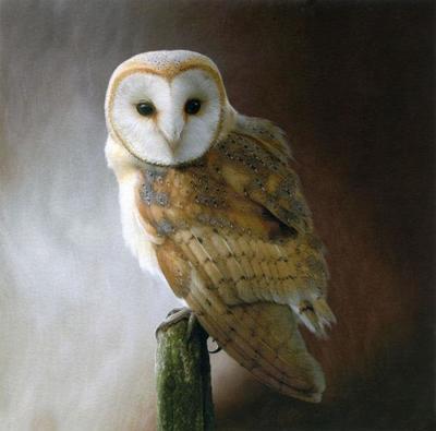50-barn-owl