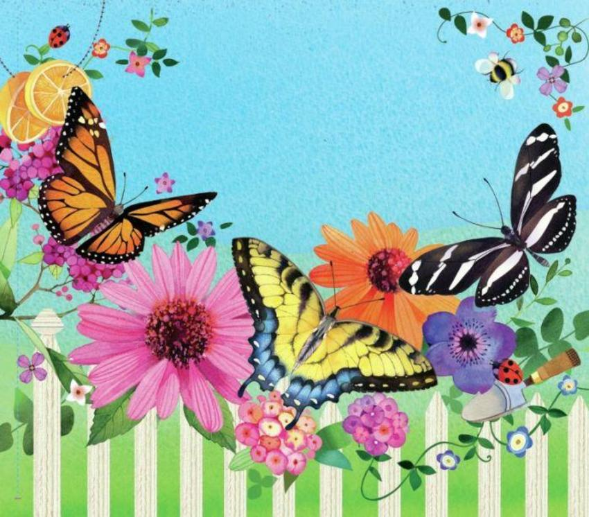 Butterfly Front Cover