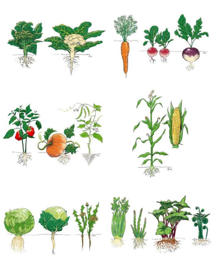Vegetable Science Nature Real