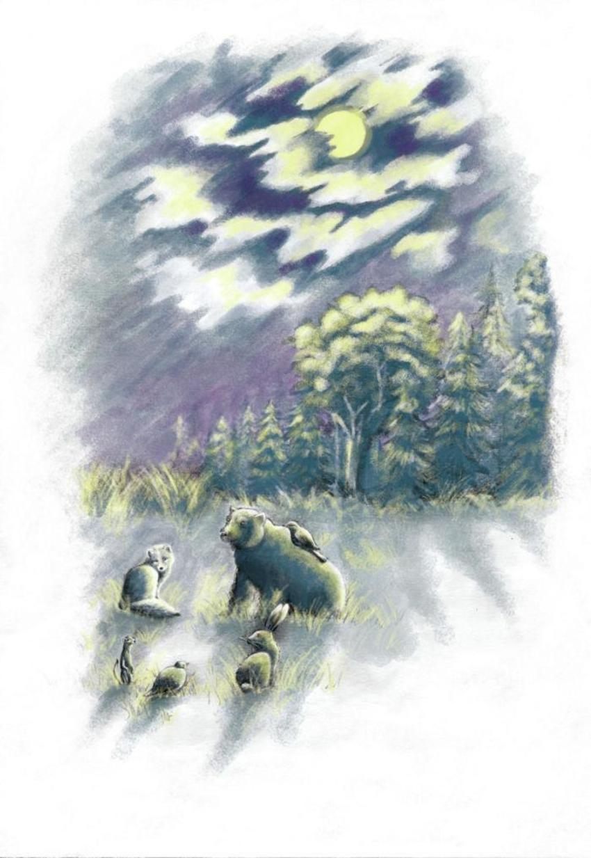 Night Moon Sky Animals Forest