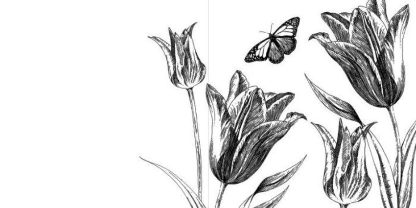 Botanical tulip.jpg