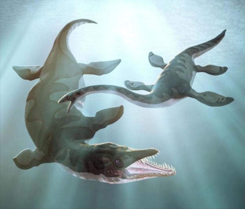 28 Plesiosaur And Both To Pliosaur