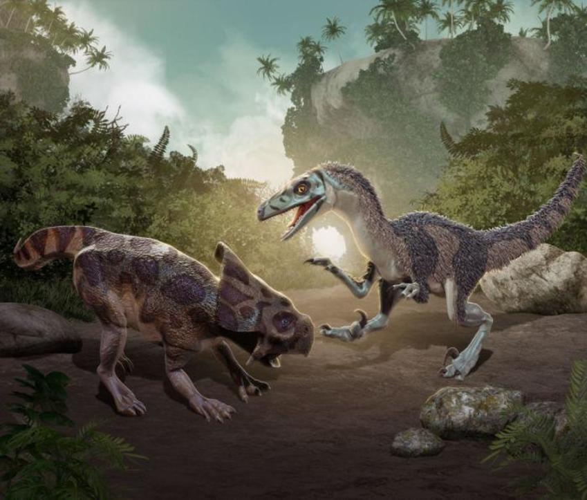 10 Velociraptor Fighting Protoceratops